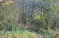 Home for sale: 17xx Emerald Lake Way, Bellingham, WA 98226