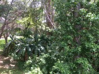 Home for sale: 1738 Lake Cypress Dr., Safety Harbor, FL 34695