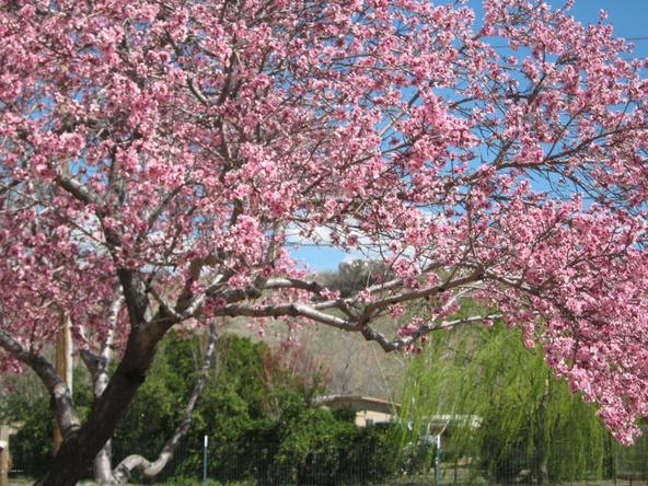12075 E. Kachina Pl., Dewey, AZ 86327 Photo 20