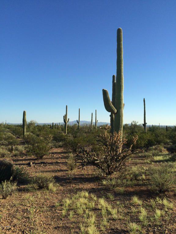 11715 Tortoise Trail, Tucson, AZ 85743 Photo 3
