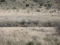 Home for sale: Tract 13 Alamo Canyon, Tinnie, NM 88351