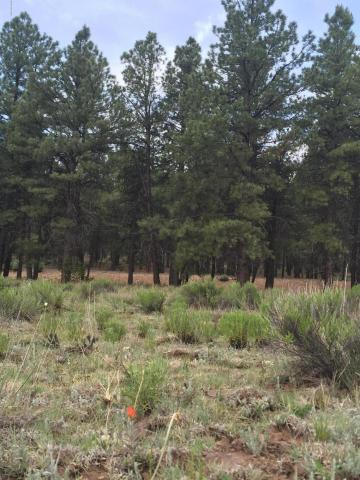 737 N. Cool Pines Rd., Williams, AZ 86046 Photo 8