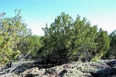 1419 W. Maverick Ln., Williams, AZ 86046 Photo 7