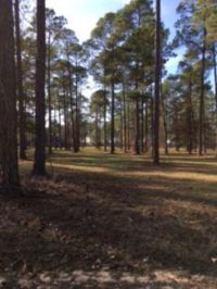 Home for sale: Lot 28 Cannon Branch Rd., Cordele, GA 31015