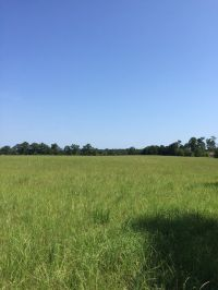 Home for sale: County Rd. 643, Chancellor, AL 36316