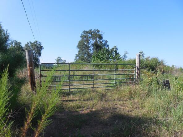 00 County Rd. 571, Hanceville, AL 35077 Photo 1