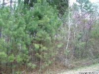Home for sale: Duck Springs Rd., Attalla, AL 35954
