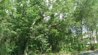 Home for sale: Lot 4 Hwy. 66, Loris, SC 29569