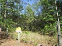 Home for sale: Lot 28l Aucilla River Estate Rd., Lamont, FL 32336