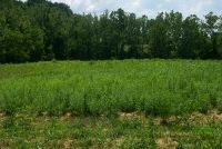 Home for sale: 0-Lot 4 Salem Branch, Vanceburg, KY 41189