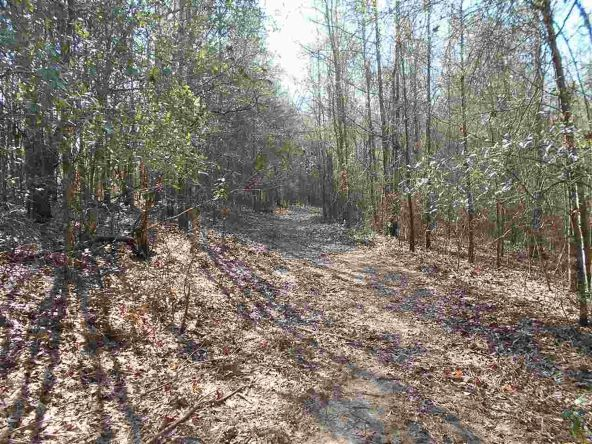 16.9 Acres Private Rd. 1363, Ariton, AL 36311 Photo 6