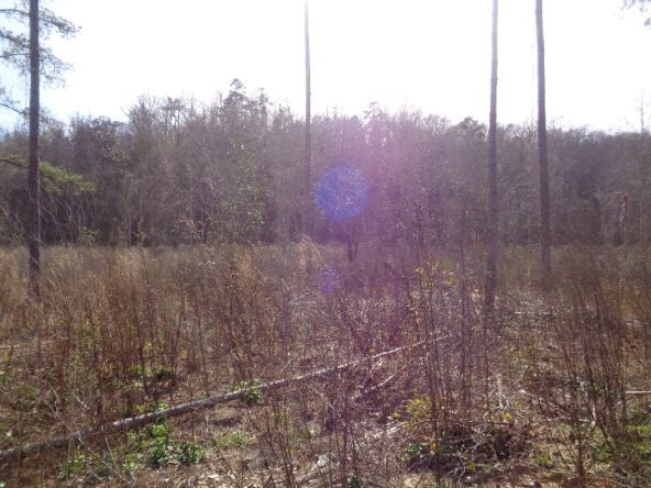 275+/-Ac Cty Rd. 46/Cty Rd 97, Abbeville, AL 36310 Photo 34
