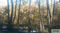 Home for sale: N./S. River Ridge, Reidsville, GA 30453