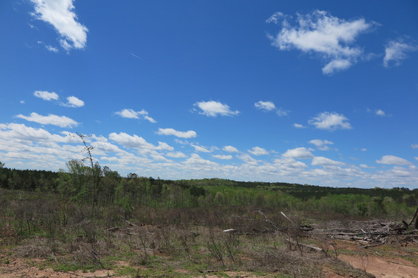 122 +/- Acres County Rd. 176, Five Points, AL 36855 Photo 15