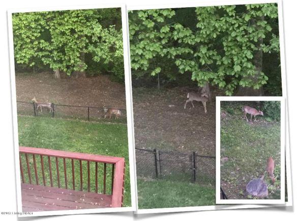 3300 Audubon Ridge Dr., Louisville, KY 40213 Photo 32