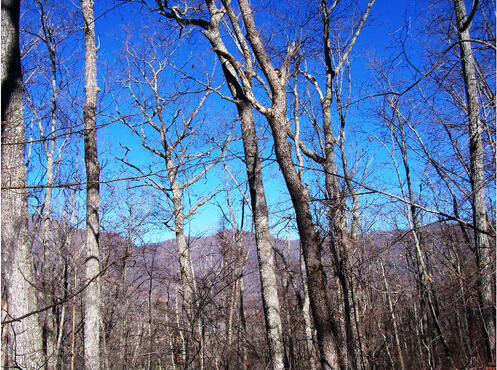 Hwy. 64 East, Hayesville, NC 28904 Photo 7