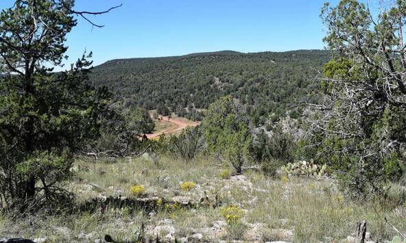 264 Sierra Verde Ranch, Seligman, AZ 86337 Photo 16