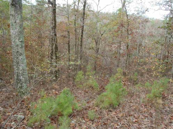 108 Buckthorn, Mountain Pine, AR 71956 Photo 2