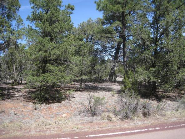 2901 Buckskin Rd., Overgaard, AZ 85933 Photo 4