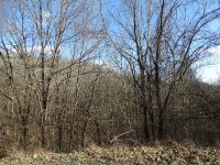 Home for sale: Lot 15 Park Dr., Silver Point, TN 38582