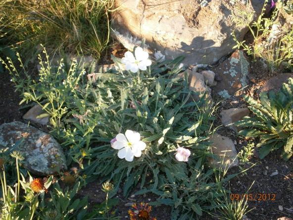 10922 S. High Mesa Trail, Williams, AZ 86046 Photo 52