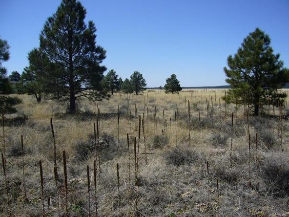 10558 E. White Horse Lake, Parks, AZ 86018 Photo 16