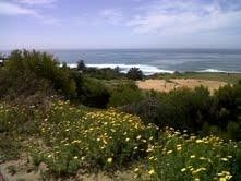 886 Amiford Dr., San Diego, CA 92107 Photo 19