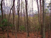 Home for sale: Lot 8 Whitney Blvd., Lake Lure, NC 28746