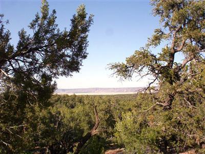 54867 N. Presidio Parkway, Seligman, AZ 86337 Photo 5