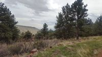 Home for sale: 0 Steamboat Valley Rd., Lyons, CO 80540