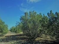 Home for sale: 10z Rocky Ridge Rd., Williams, AZ 86046