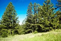 Home for sale: Tbd Upper Mulkey Gulch Rd., Drummond, MT 59832