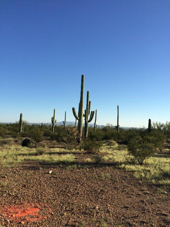 11715 Tortoise Trail, Tucson, AZ 85743 Photo 7