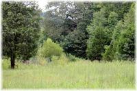 Home for sale: 0 Sams Creek Rd., Pegram, TN 37143