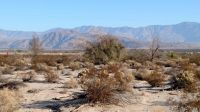 Home for sale: Lot 22 Zuni Trail, Borrego Springs, CA 92004