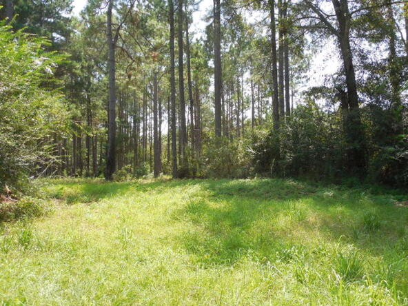 4 Acres Quail Dr., Dothan, AL 36301 Photo 7