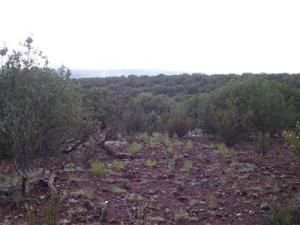 491 Westwood Ranch Lot 491, Seligman, AZ 86337 Photo 2