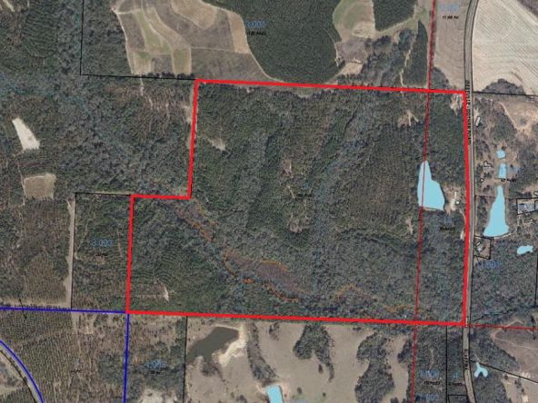 5496 Henry Co Rd. 99, Newville, AL 36353 Photo 5