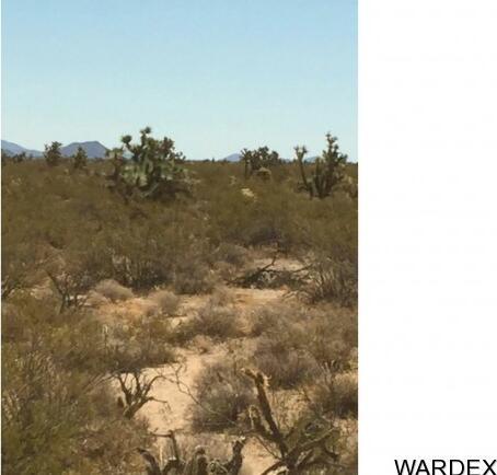 71 Appaloosa Rd., Yucca, AZ 86438 Photo 4