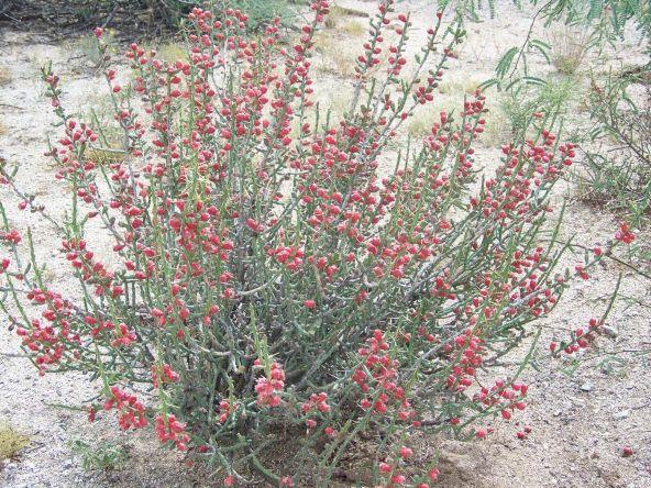 1326 N. Tanque Verde Loop, Tucson, AZ 85749 Photo 29