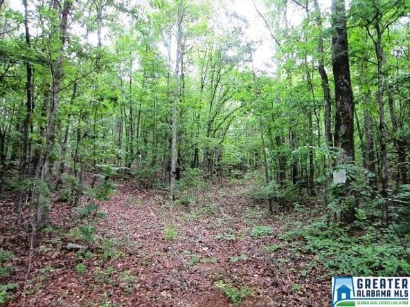 40 Acres Oaks Chapel Rd., Goodwater, AL 35072 Photo 8